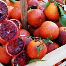 Саженец Первоцвет Апельсин красный Сицилийский