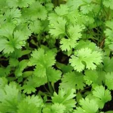 Семена Агрофа Кориандр (Кинза) Прелесть 30 гр