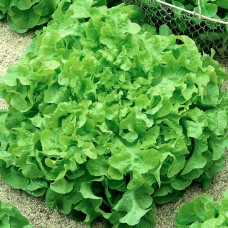 Семена Агрофа Салат Букет 10 гр