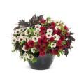 Цветы (130)