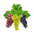 Виноград (7)
